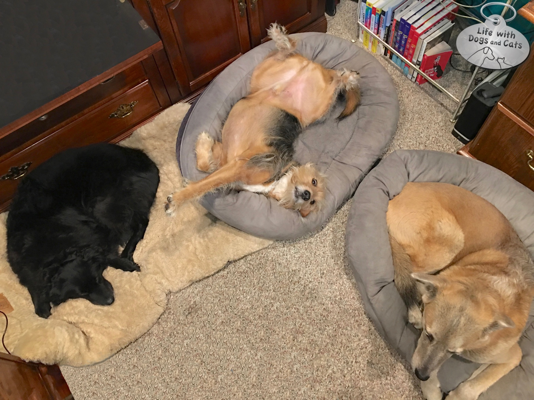 Lilah, Tucker, and Jasper in my office. This photo perfectly captures Tuckers' personality.