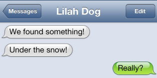 Text from Dog: Dig it!