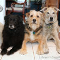 Lilah, Tucker, and Jasper waiting for their treats. Those faces!