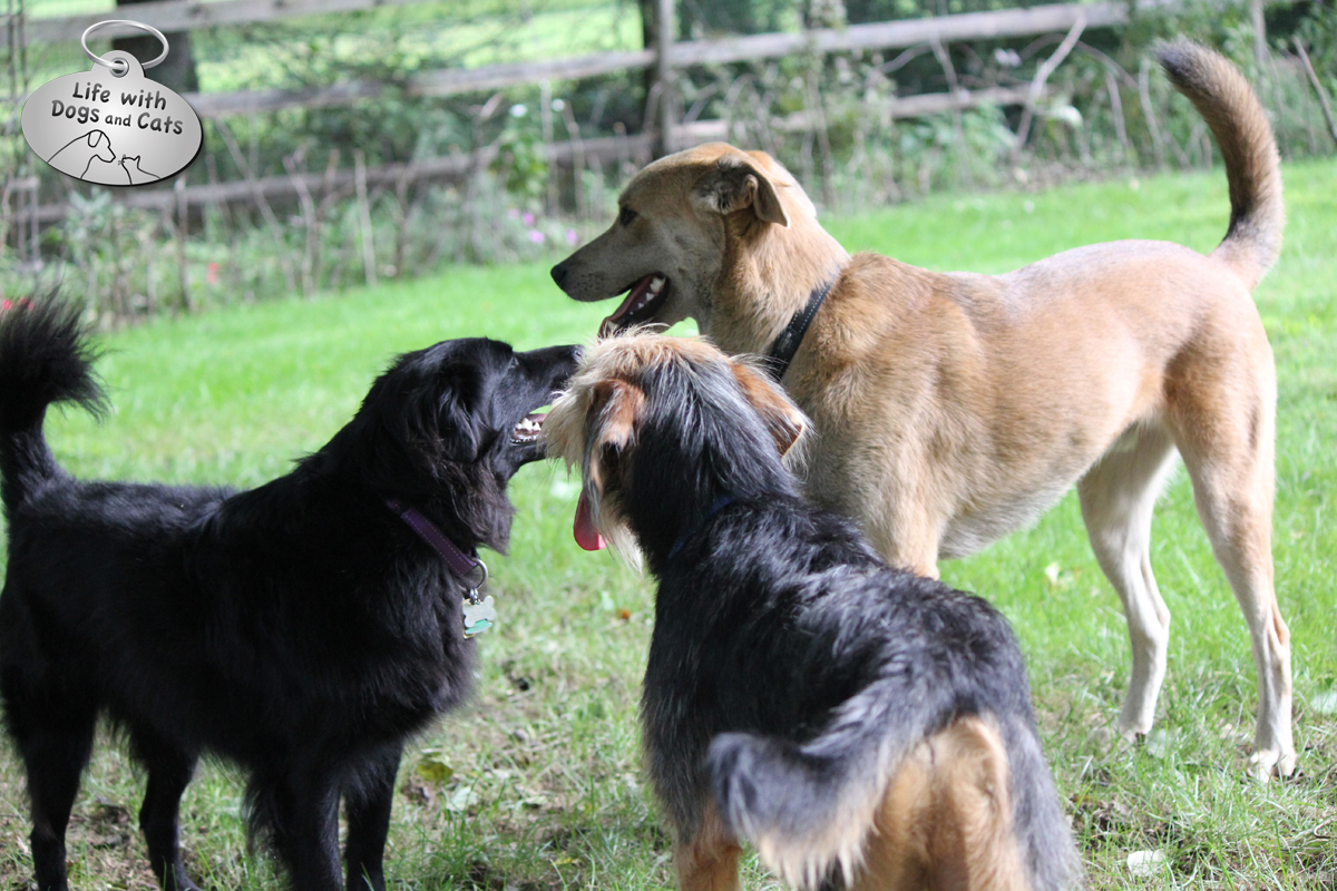 Doggy discussion