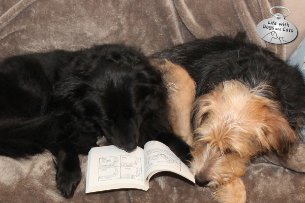Lilah the dog reads Rupert Fawcett's book Off The Leash. to Tucker.