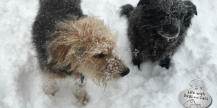 Snow Fun: Dogs, Cats & Humans Enjoy the Blizzard of 2016