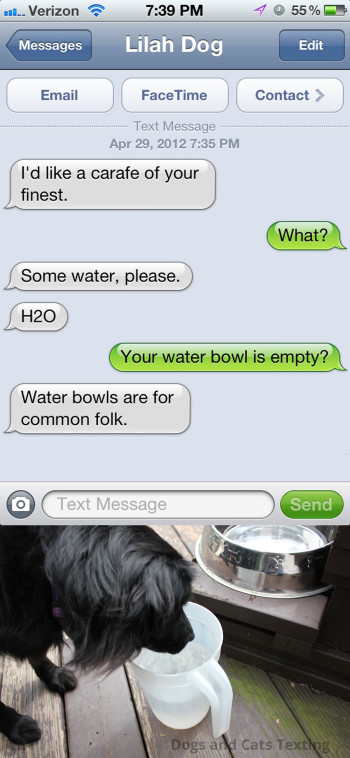 Text from Dog: Some water please. Text from me: Your water bowl is empty? Text from Dog: Water bowls are for common folk.