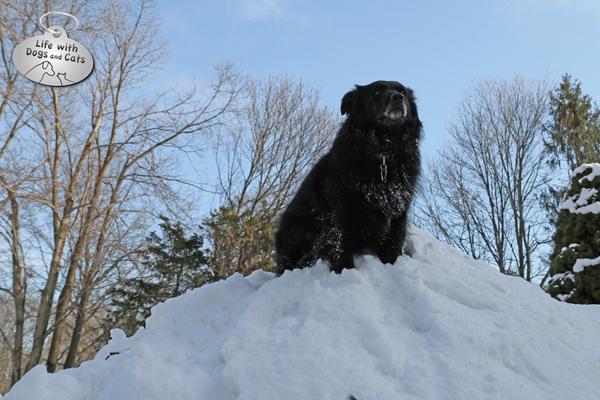 I'm top dog.