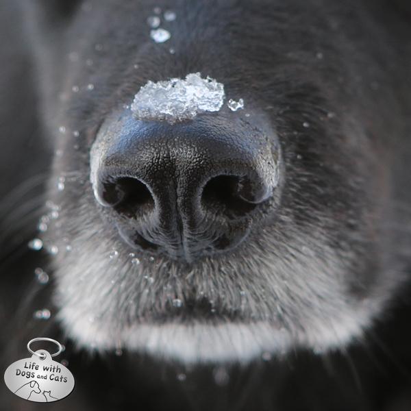 Lilah's nose
