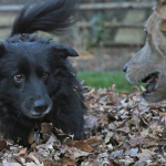 My helpful dogs make fall leaf clean-up so much easier
