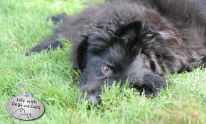Haiku by Dog: Joy