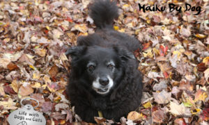 Haiku by Dog: Leaf