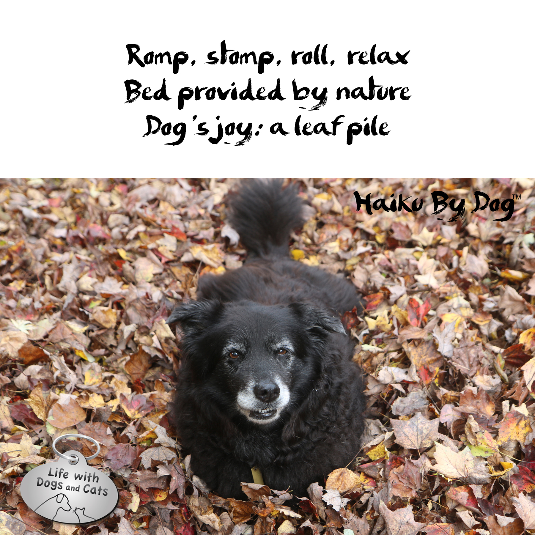 romp, stomp, roll, relax / bed provided by nature / dog's joy: a leaf pile #HaikuByDog