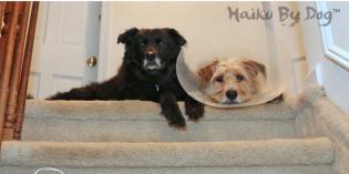 Haiku by Dog: Better