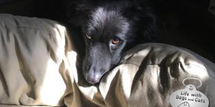 Haiku by Dog: Comfortable