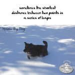 Haiku by Dog: Distance