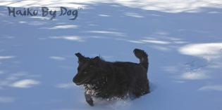 Haiku by Dog: Distance