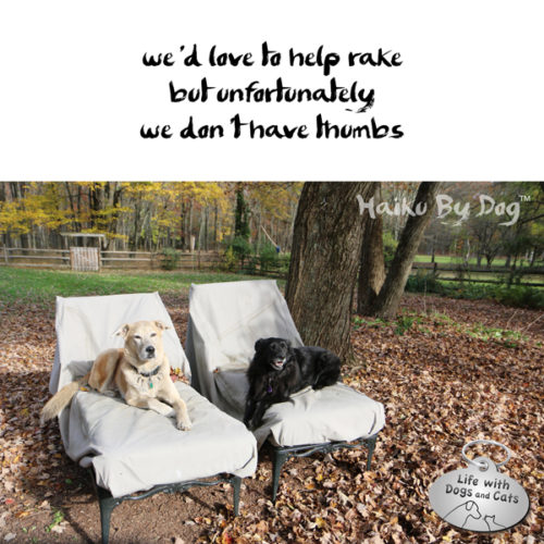 we'd love to help rake / but unfortunately / we don't have thumbs #HaikuByDog