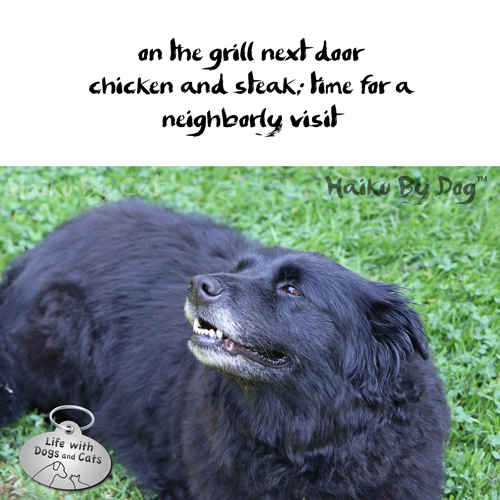 Haiku by Dog: on the grill next door / chicken and steak; time for a / neighborly visit