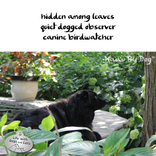 Haiku by Dog: hidden among leaves / quiet dogged observer / canine birdwatcher
