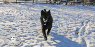 Haiku by Dog: Treats