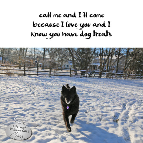 #HaikuByDog call me and I'll come / because I love you and I / know you have dog treats