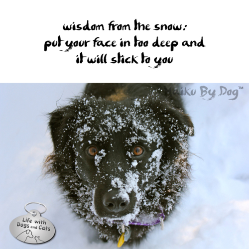 Haiku by Dog: wisdom from the snow: / stick your face in too deep and / it will stick to you