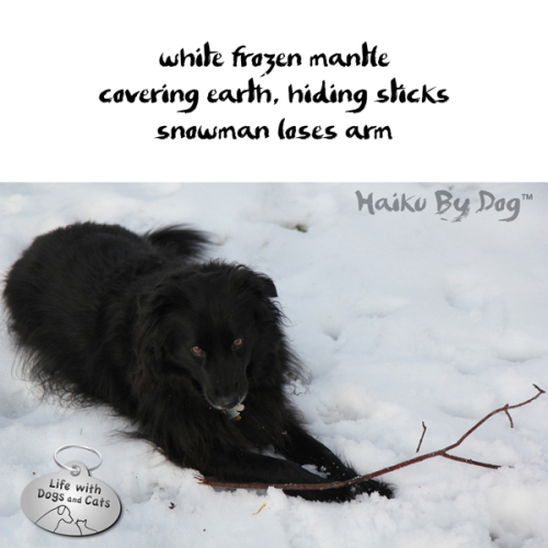 Haiku by Dog: white frozen mantle / covering earh, hiding sticks / snowman lost an arm