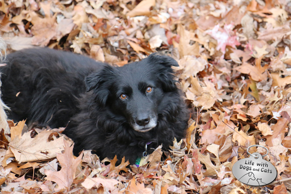Lilah dog in fall leaves