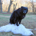 """Lilah climbed up on this tiny frozen lump and offered me the saddest look: """"What happened to my snow?"""""""