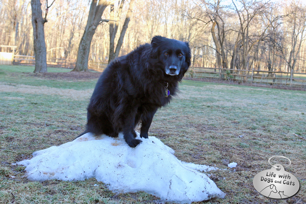 "Lilah climbed up on this tiny frozen lump and offered me the saddest look: ""What happened to my snow?"""