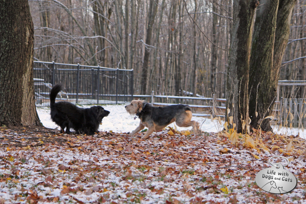 Lilah and Tucker having fun in the leaves and snow.