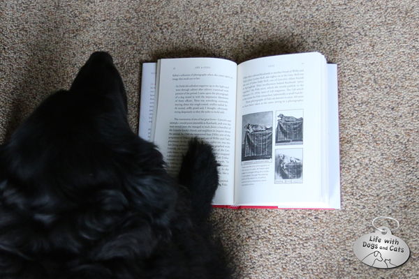 Lilah has turned to the page featuring the only three known photos of Fido.