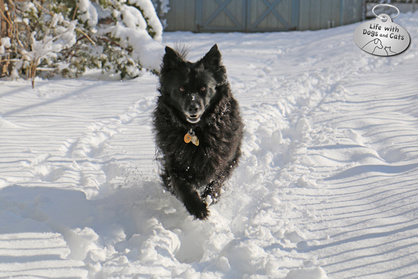 Lilah running in the snow