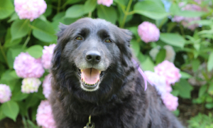 Fur Goodness Sake: My dog visits the groomer for the first time