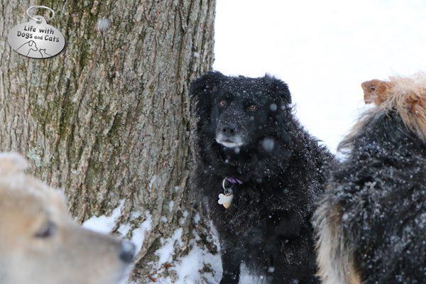 Lilah sits by the tree while Jasper and Tucker consider the next snow game.