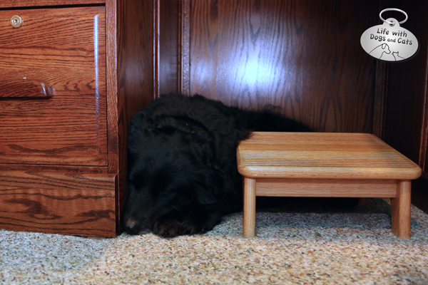Lilah sleeping under desk