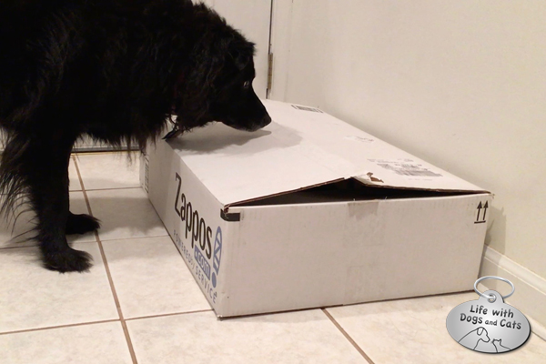Lilah inspects the box where Elsa Clair is hiding