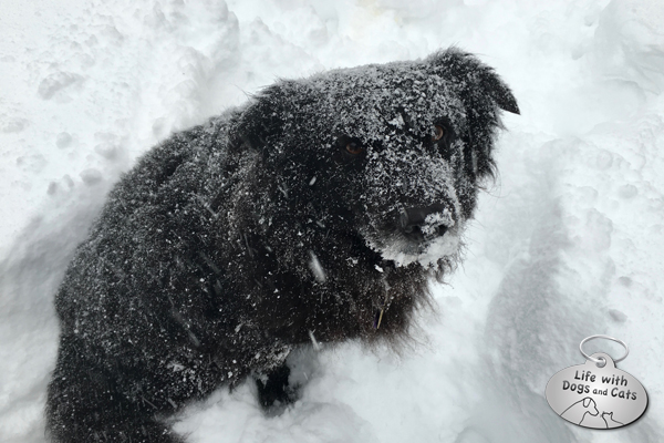 Snow-covered Lilah