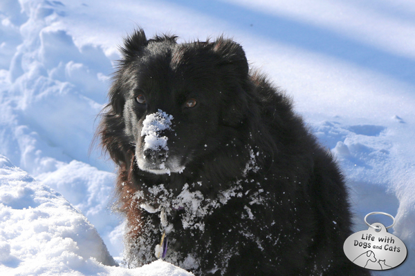 What it looks like after you've just stuck your snout deep into the snow.