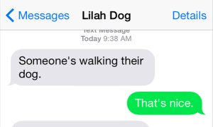 Text from Dog: Full report