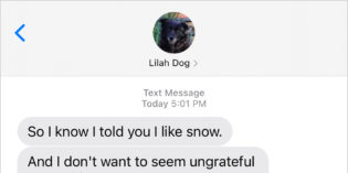 Text from Dog: Snow kidding