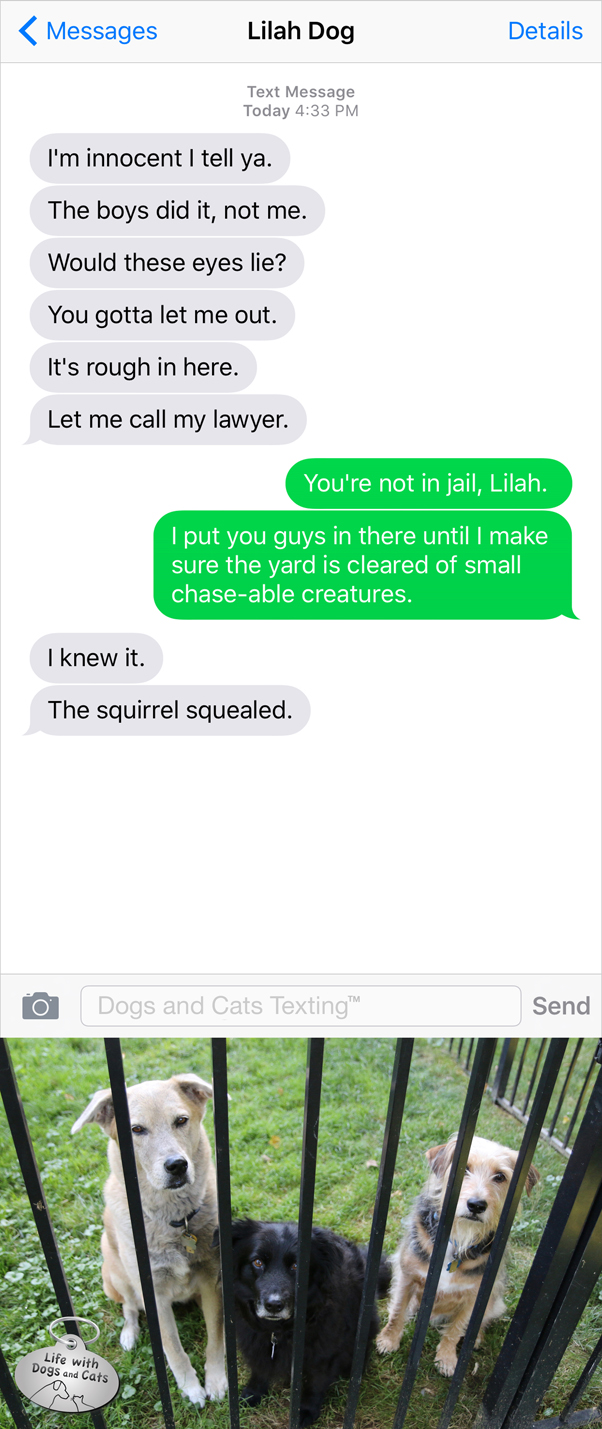 Text from Dog: I'm innocent. Me: You're not in jail. Dog: The squirrel squealed!