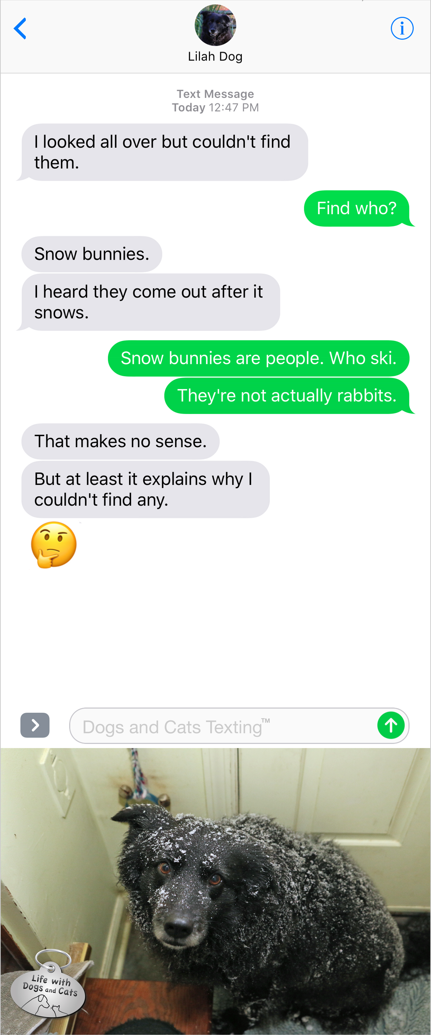 Text From Dog: I looked all over but couldn't find them. Me: Who? Dog: Snow bunnies. I heard they come out after it snows. Me: Snow bunnies are people. Who ski. They're not actually rabbits. Dog: That makes no sense. But at least it explains why I couldn't find any.