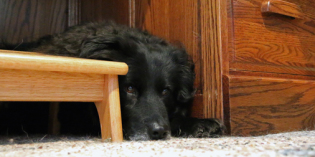 Dog Cave: Finding Safety and Security Under the Desk