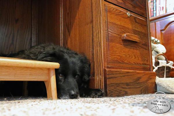 Lilah under my desk