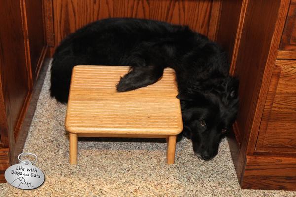 Lilah rests under my desk