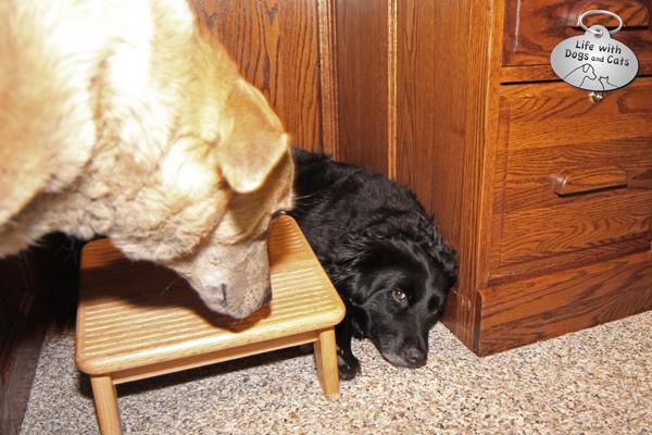 Jasper looks at Lilah hiding under the desk