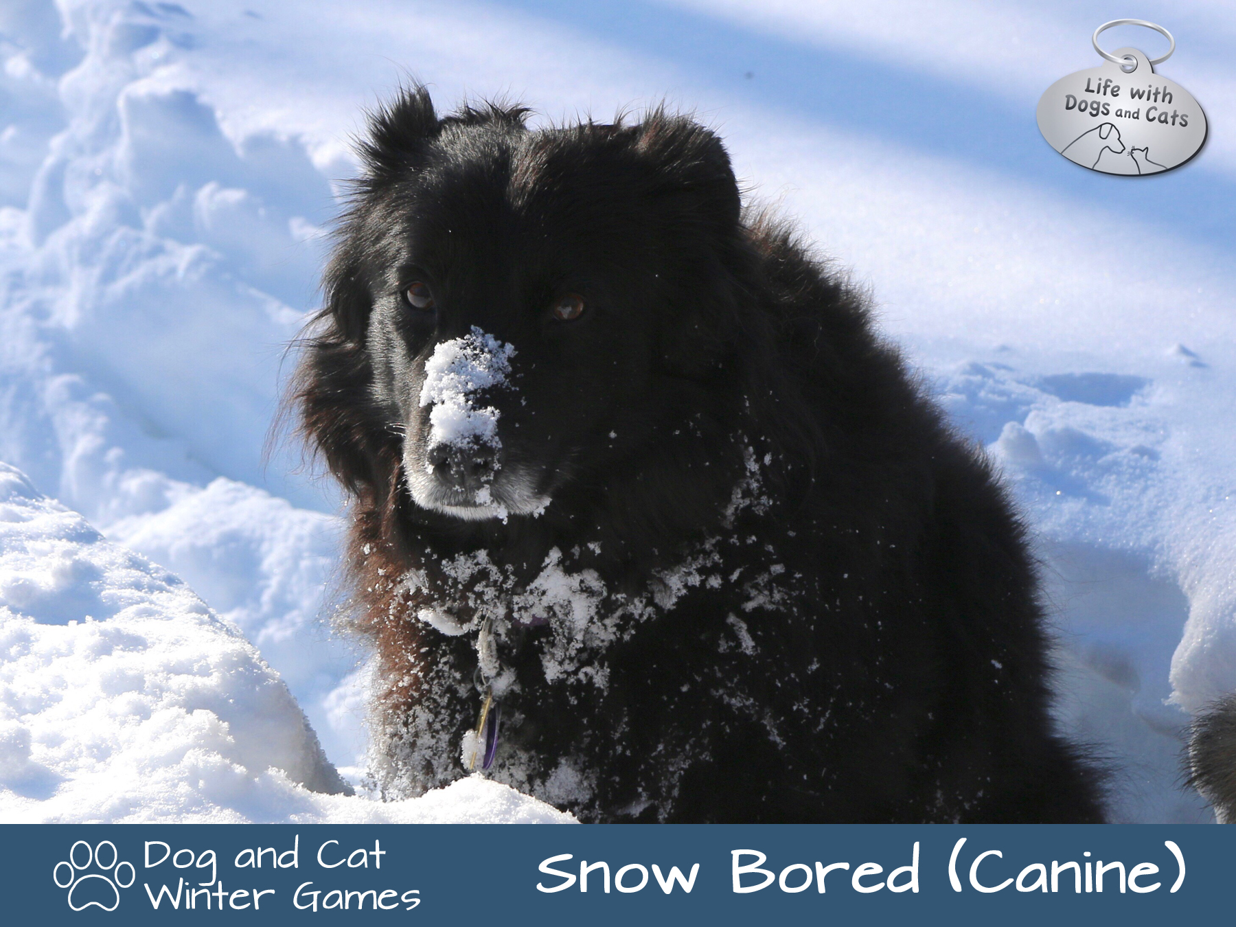 Dog and Cat Winter Games: Snow bored