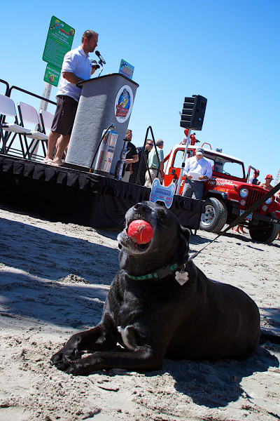 Dog chews on a sandy ball while fire hydrant sculpture unveiled at Wildwood NJ dog beach
