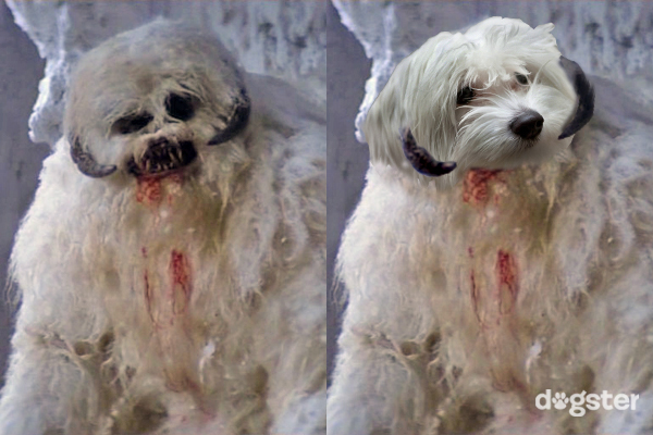 Dogs of Star Wars Maltese as wampa dogster logo