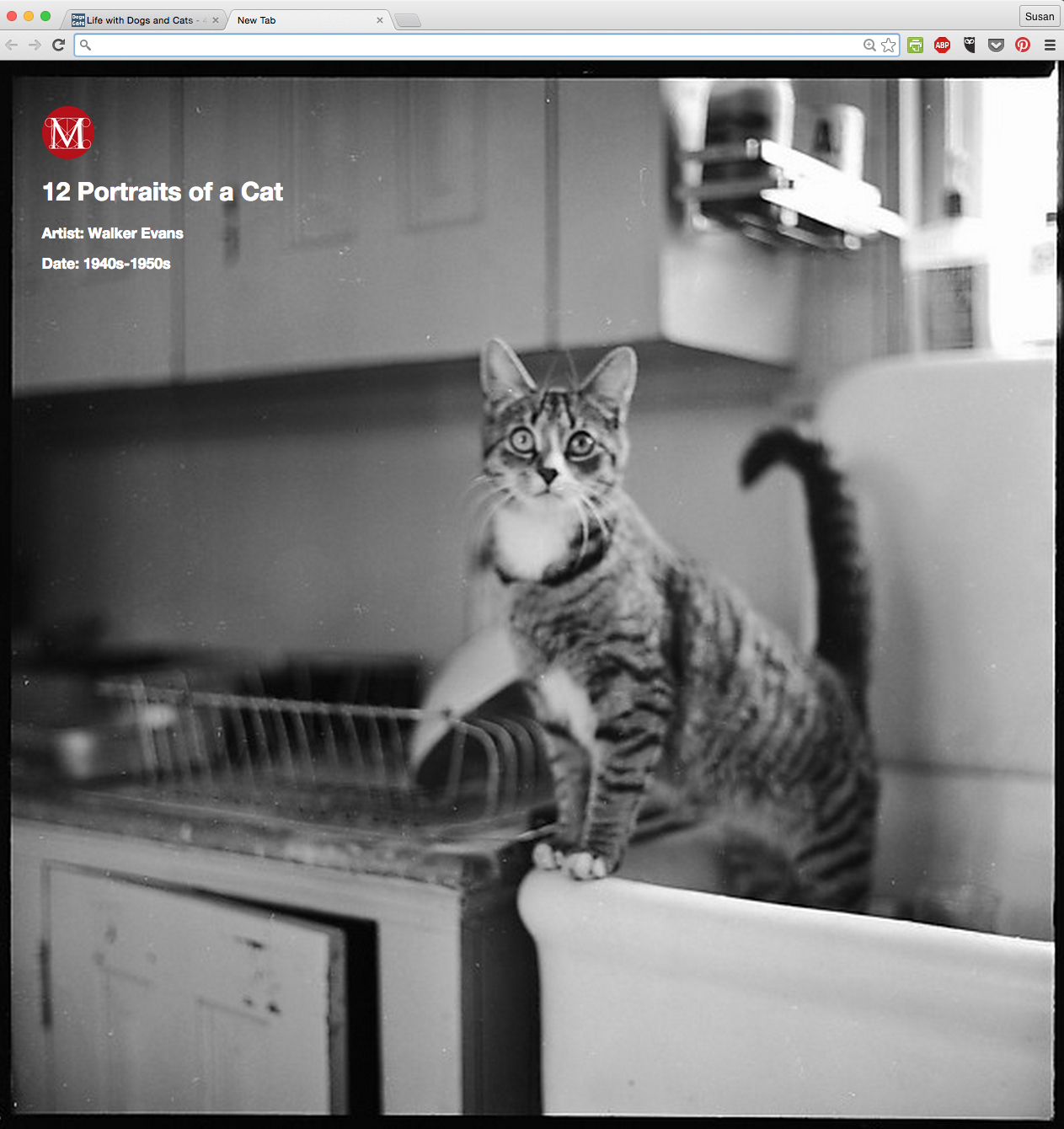 12 Portraits of a Cat by Walker Evans from the Meow Met Chrome Extension.