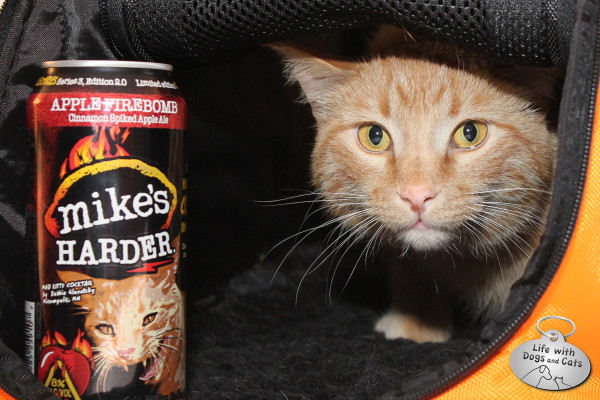 Waffles the cat in his Sleepypod posing by a can of Mike's Harder Mad Kitty Cocktail.