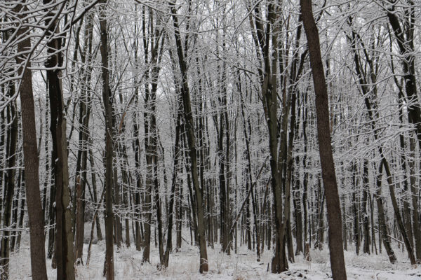 The woods behind our house after a snowfall.